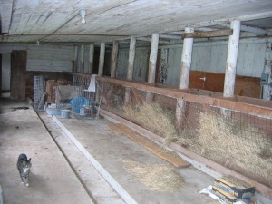interior-shed-south-milking-area-with-stanchions
